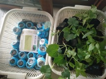 Aapti Gardening solutions sponsored vegetable saplings and micro greens