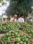 Posing with Vadu Maanga - Tender baby mango